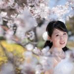 桜でフォトウェディング撮影の季節です!!