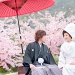 桜の和装ロケ写真を加工してみた