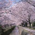 桜や新緑と共に…春こそ和装婚