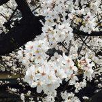 🌸お花見で気づいた接客🌸